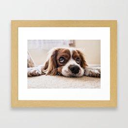 Cute dog with Big Innocent Eyes Framed Art Print