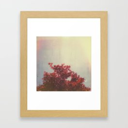 Japanese Maple Framed Art Print