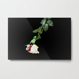 White rose covered with blood Metal Print