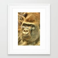 gorilla Framed Art Prints featuring Gorilla by Doug McRae