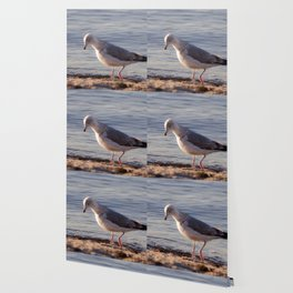 Seagull at the sea Wallpaper
