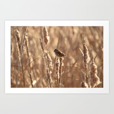 A Sparrow on Catails Art Print
