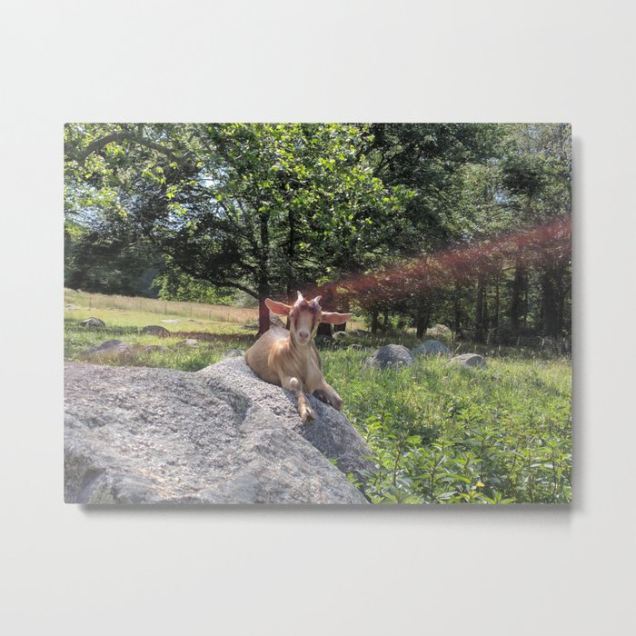 Sunshine and Goats Metal Print