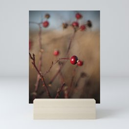 Burgundy Red Rose Hips on Brown and Blue Mini Art Print