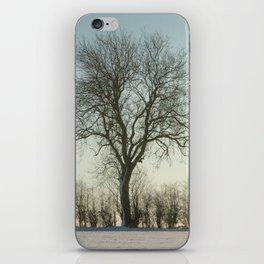 Winter tree in the low sun iPhone Skin