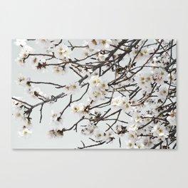 Emerging Spring Canvas Print