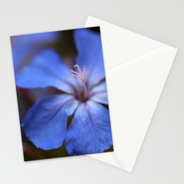 Forest Blue Stationery Cards