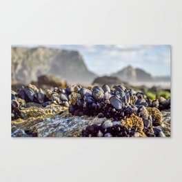 Watergate Bay - Mussels Canvas Print