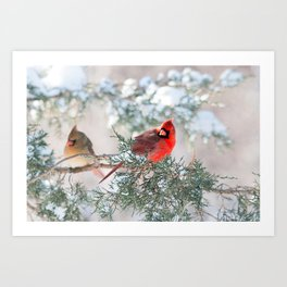 Remembering.... (Northern Cardinals) Art Print