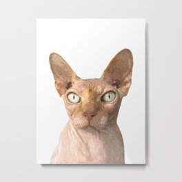Sphynx cat portrait Metal Print