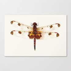 dragonfly #4 Canvas Print