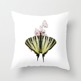 Scarce Swallowtail On Wild Garlic Flowers Vector Isolated Throw Pillow