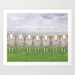 border leicesters in a line Art Print