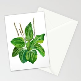 Plantago major Stationery Cards