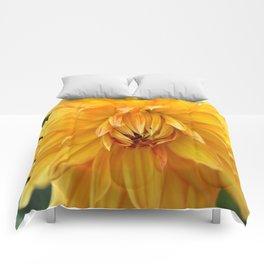 Dahlia Sun Comforters