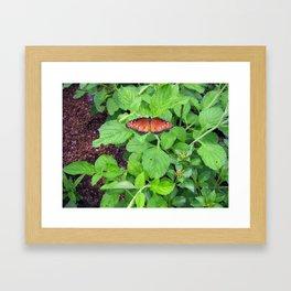 Monarch Butterlfy on Leaves Framed Art Print