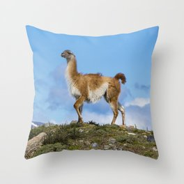 A Guanaco, in Patagonia, Chile. Throw Pillow
