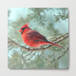 Dreamy Morning (Northern Cardinal) Metal Print