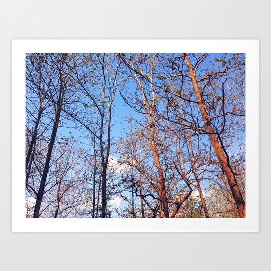 Hush Forest Art Print