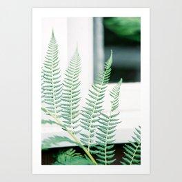 Soft Fern Art Print