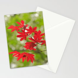 Acer leaves Stationery Cards