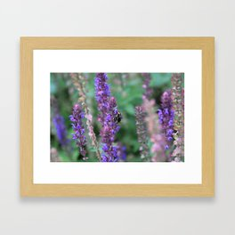 Lavender Bumblebee Framed Art Print