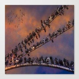 Pigeon Gangs Canvas Print