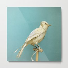 Albino Blue Jay - Square Format Natural History Bird Portrait Metal Print
