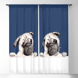 Pug with Blue Blackout Curtain