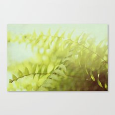 fern goodness Canvas Print