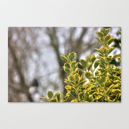That Winter Feeling Canvas Print