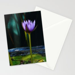 Nymphaea 'Rhonda Kay' Stationery Cards