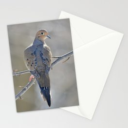 Mourning Dove on Winter Branch Stationery Cards
