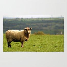 Solitary Sheep Rug
