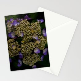 MADE YOU LOOK Stationery Cards