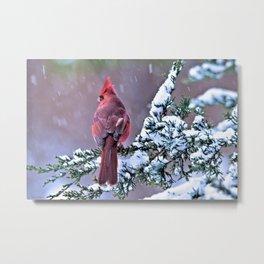 Winter Returns for the Cardinal Metal Print