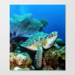 Turtle on the Reef Canvas Print