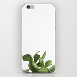 Crassula Succulent iPhone Skin