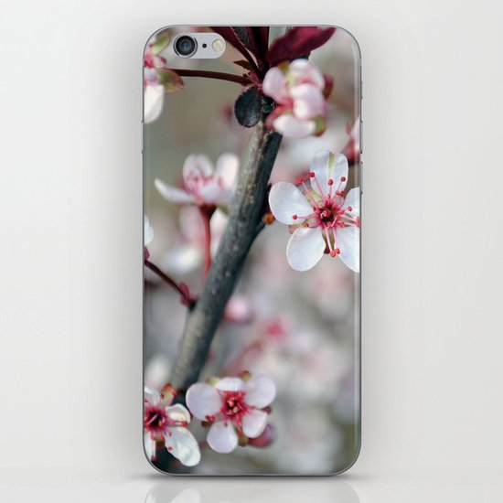 Spring Buds iPhone & iPod Skin