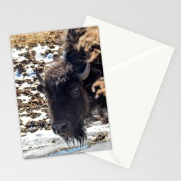 North American Bison by Teresa Thompson Stationery Cards