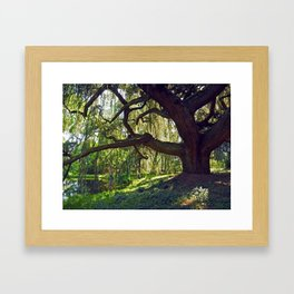 Weeping Blue Atlas Cedar Framed Art Print