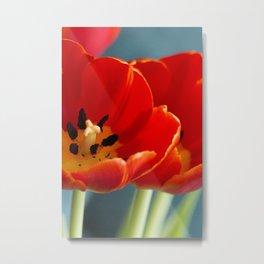 Red Dutch Tulip Metal Print