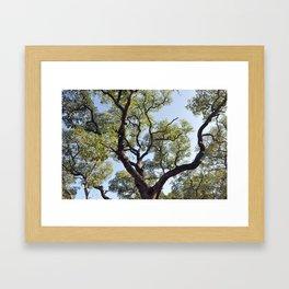 Live Oaks Framed Art Print