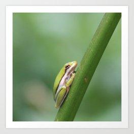 Tiny Tree Frog Art Print