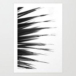 Tropical Darkroom #43 Art Print