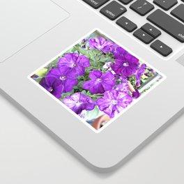 Petunias Sticker