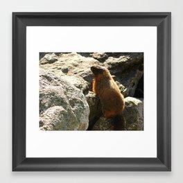 The Marmot Framed Art Print