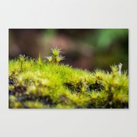 moss Canvas Prints featuring Moss. by Michelle McConnell