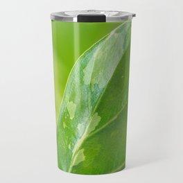 Alocasia Albo Variegata Variegated Leaf Travel Mug