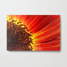 Orange Sunflower Macro Metal Print